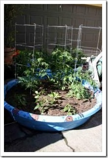 Salsa Garden in the kid pool love this idea Now to talk your