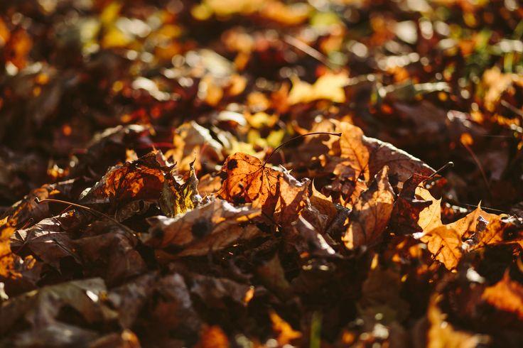 https://flic.kr/p/Mn2euk | Autumn leaves | Get more free photos on freestocks.org