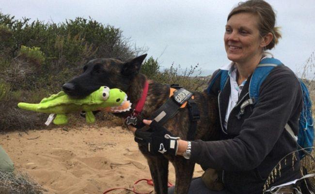Qu Est Ce Qu Un Chien De Detection De La Faune Dogs Animal
