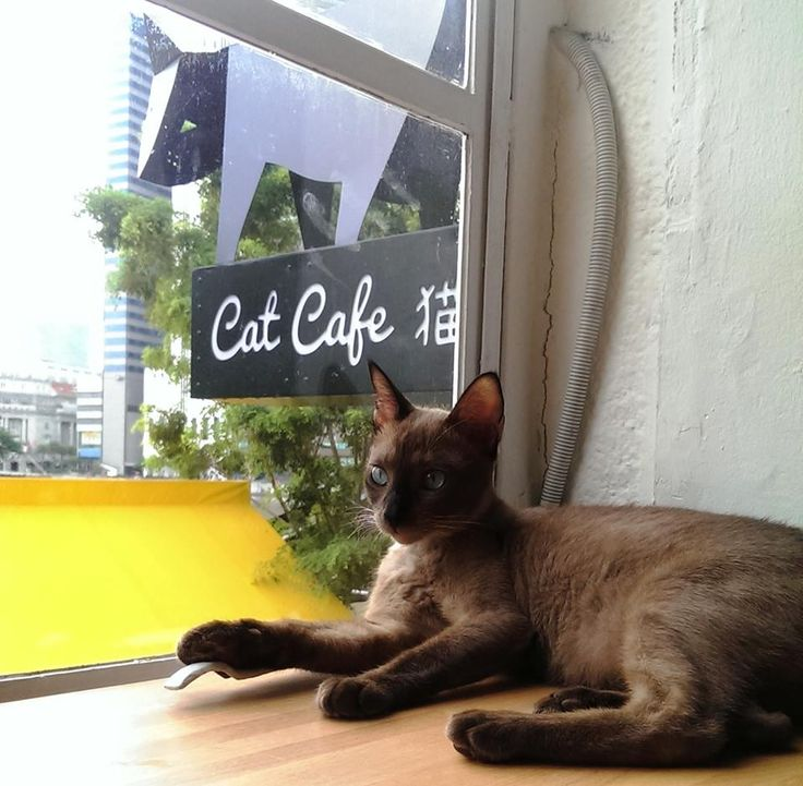Cat Cafe Neko no Niwa, Singapore Singapur