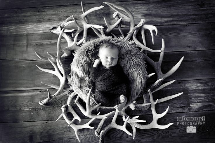 newborn on antlers - Google Search