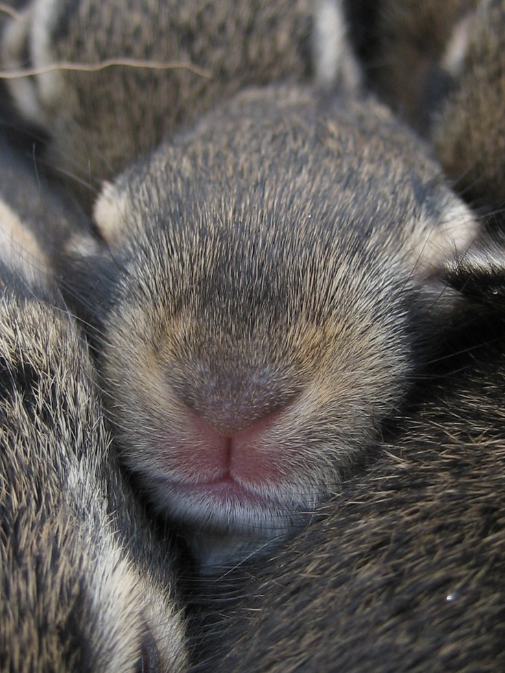 Wild baby rabbits.