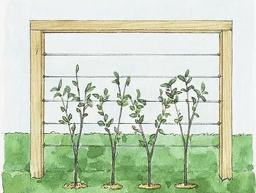 living fence - cool idea for west side of deck...would hide the stuff under the deck.