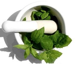 How to Make Stevia Extract  ~Making tonight