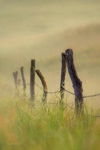 Foggy Fence Posts, Kansas (Brad Neff photo)