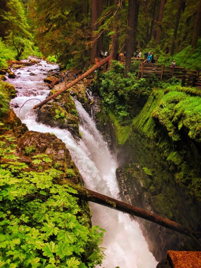 Hiking Sol Duc Falls and the northern rainforest of Olympic National Park