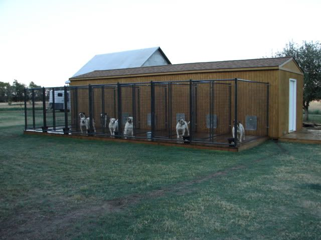 Professional dog kennel pictures how to run a for Indoor outdoor dog kennel design
