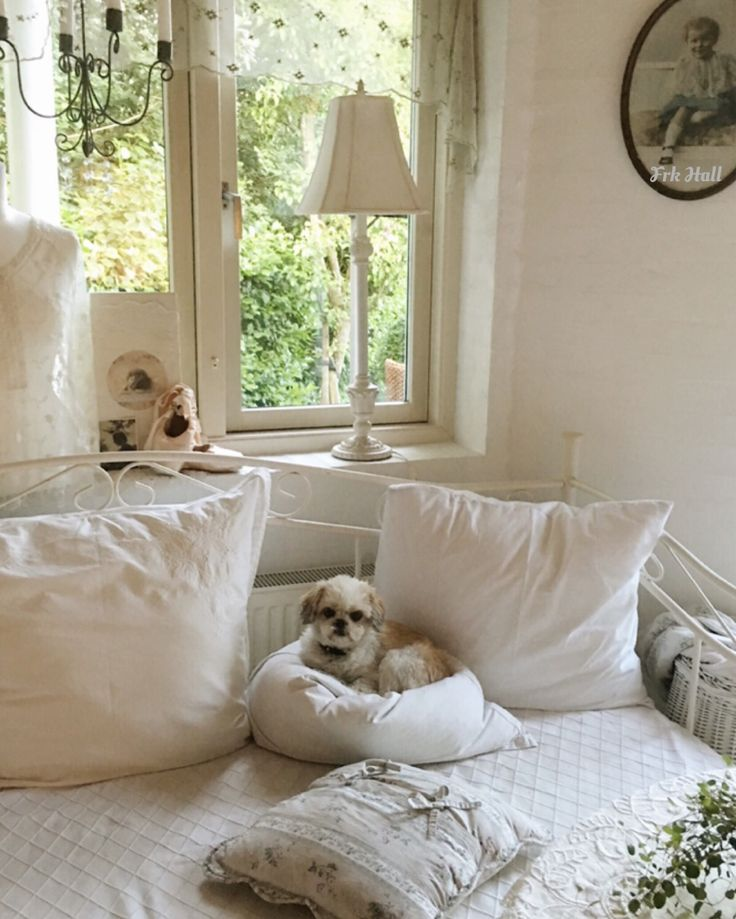 My shabby chic white romantic daybed, and my daughters little dog, a griffon/shih tzu
