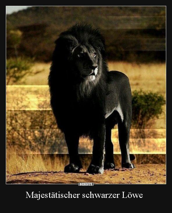 Schwarzer Löwe
