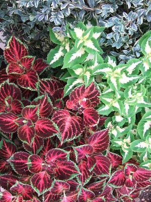 Plants for Pool Landscaping