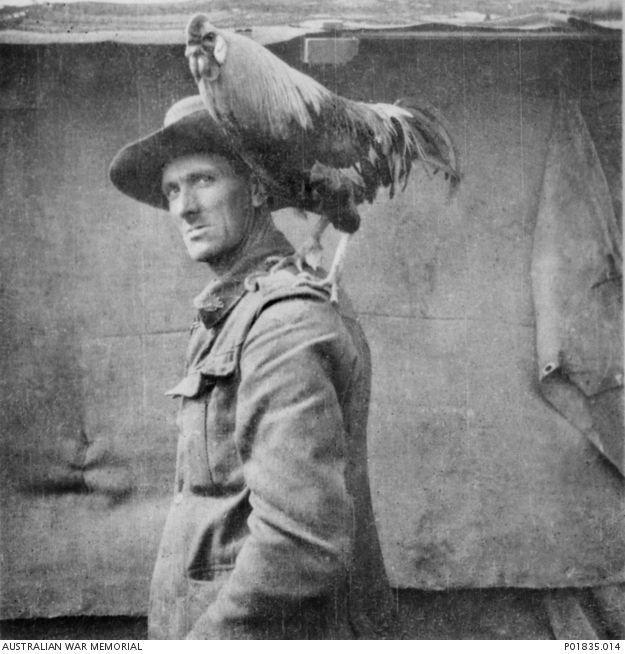 2649 Driver Walter Henry Farrell of the 2nd Divisional Signals Company, with the unit mascot, a rooster named 'Jack' or 'Jackie', perched on his shoulder. Members of the unit had brought the animal from Egypt in 1916 when it was still a chick. They found 'Jack' a better guard than a dog, as he attacked any stranger who entered the unit lines.