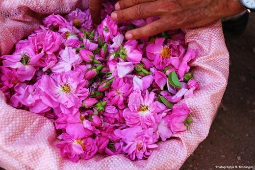Sac de roses de Kelaat El MGouna