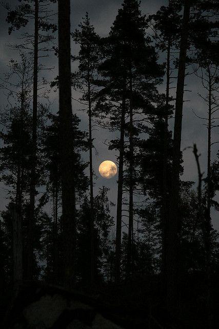 dark trees in the moonlight ~