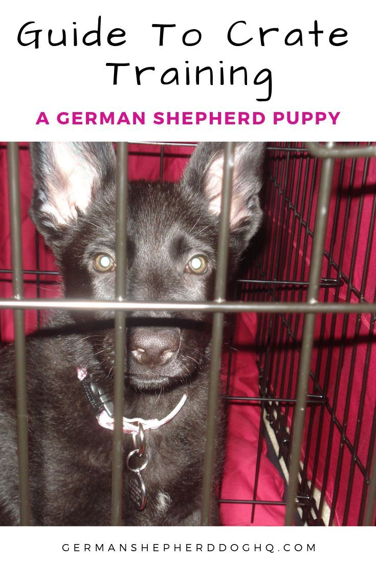 Crate Training A German Shepherd Puppy Can Help Ease The Stress Of