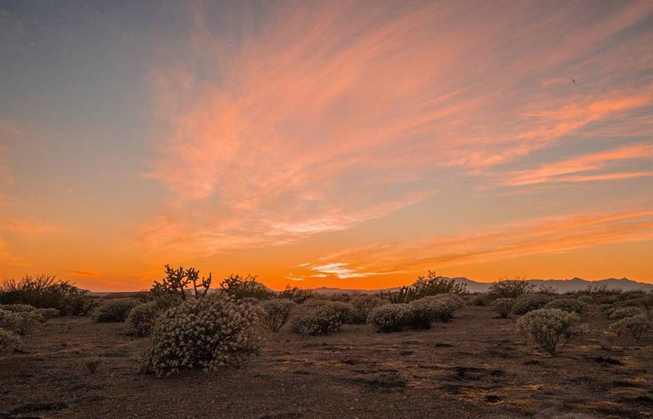 Sunrise over the desert here in Baja California in the United States of Mexico. Both the sunsets and sunrises are full of colour here presumably from the desert dust seemingly permanently in the air. For whatever reason it generally means I need to put some sun cream on!  _______________ #wakeup #sunrise #desert #bajacalifornia #exploringtheglobe #bicycletouring #cycletheworld #wanderlust #passionpassport #travelstoke #pedalforever #instatravel #bicycletrip #worldbybike #travellife…