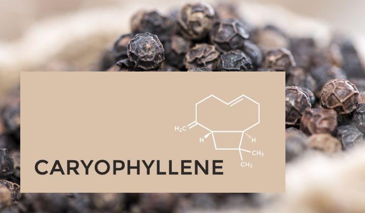 Cannabis Terpenes Caryophyllene