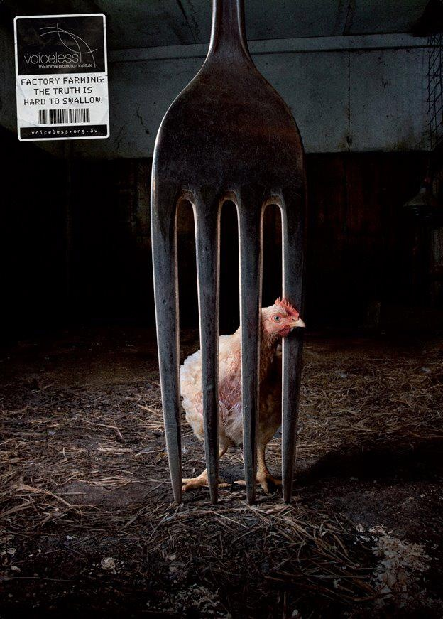 Truth Campaign via Voiceless: Animal Protection Institute