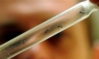 Área de transmissão da dengue mais que quadruplica em 10 anos no Brasil