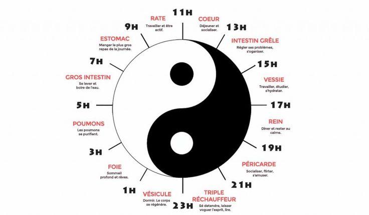 schéma horloge biologique
