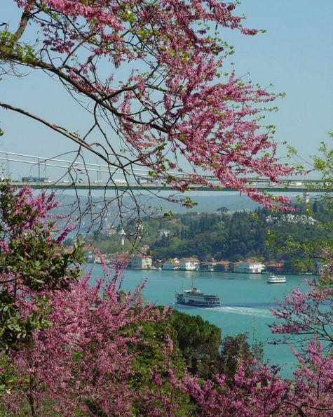 Saffet Emre Tonguç - İstanbul