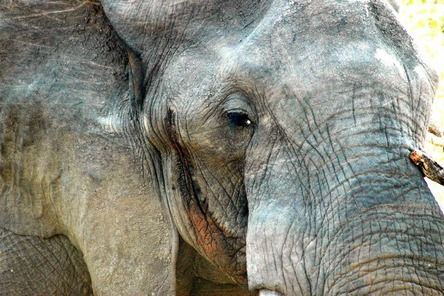 """""""Elephants have a captivatingly wise look about them.""""  Join the #MyNatureMoment movement here: bit.ly/24yVWYL"""