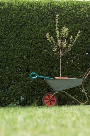 Living Privacy Fences Can Be Better Than