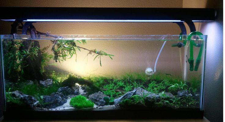 Path with with sand aquarium ideas pinterest sands for 20 gallon fish tank decoration ideas