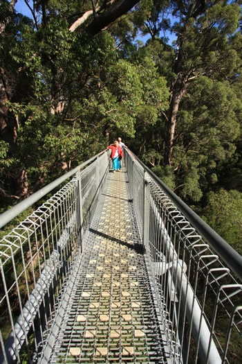 There is a beautiful Wilderness Discovery Centre at the Valley of the Giants, making this visit educational and entertaining for people of all ages which you can visit before or after your ascent into the canopy.   The Treetop Walk is suited to everyone who can walk a few hundred metres and is safe for children and Grandparents!!