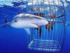 Famous North Shore Shark Adventure, Oahu / Waikiki tours & activities, fun things to do in Oahu / Waikiki | HawaiiActivities.com