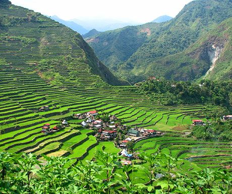 Philippines rice fields