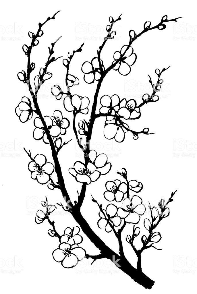 Image Result For Cherry Blossom Illustration Cherry Blossoms Illustration Cherry Blossom Flowers Cherry Blossom