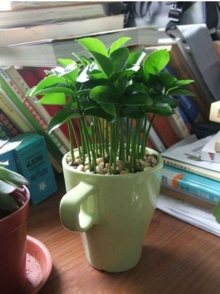 How to Grow Your Own Lemon Tree