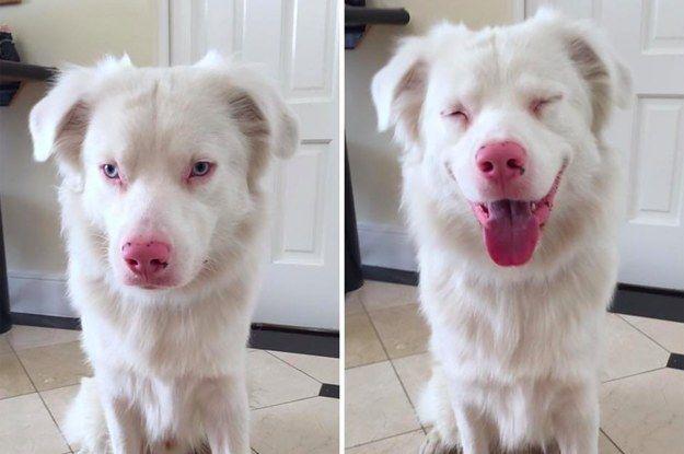 Que perro mas bello, me encantan sus ojos.