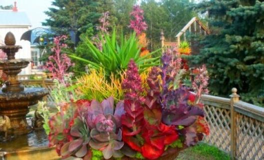 Beautiful Solar Gardens in Saskatoon