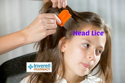 Head lice, also known as nits, are small insects without wings that live on the hair and feed and breed on the scalp of humans. They have been around throughout human history and do not carry disease but can be uncomfortable for affected individuals who may have an itchy scalp. A female louse usually lays three to eight eggs each day, which are attached to the hair fibres close to the scalp. This is because the eggs need the warmth from the head to crawl. When they hatch, they feed on the…