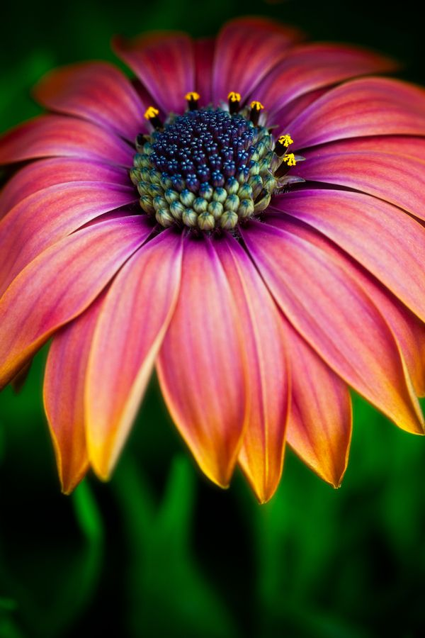 ~~You totally blow me away ~ daisy by Alan Shapiro ...