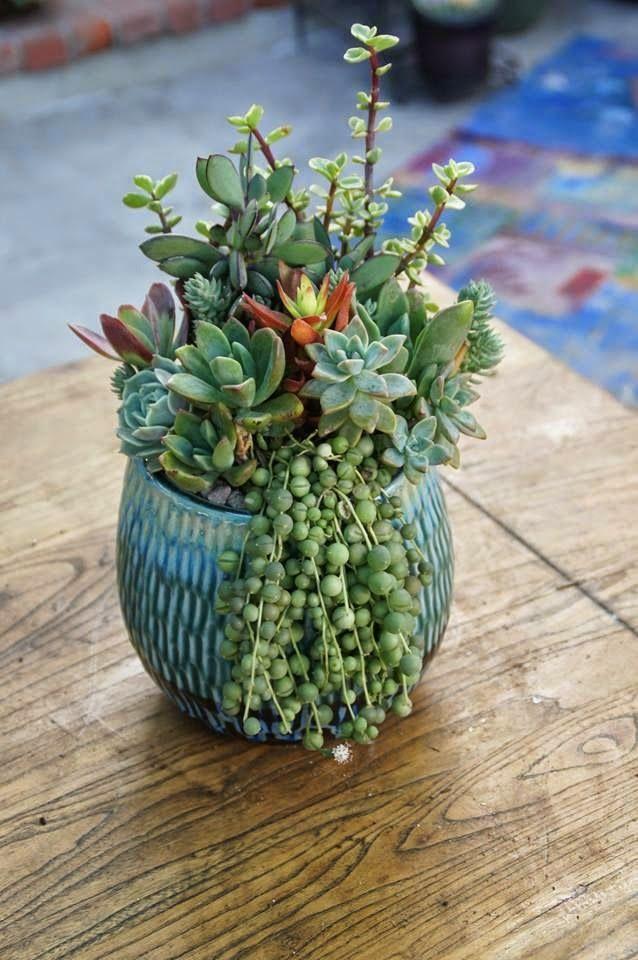 677 best images about floral arrangement ideas on Planters for succulents