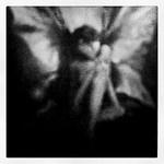 Moth or fairy?: Photo
