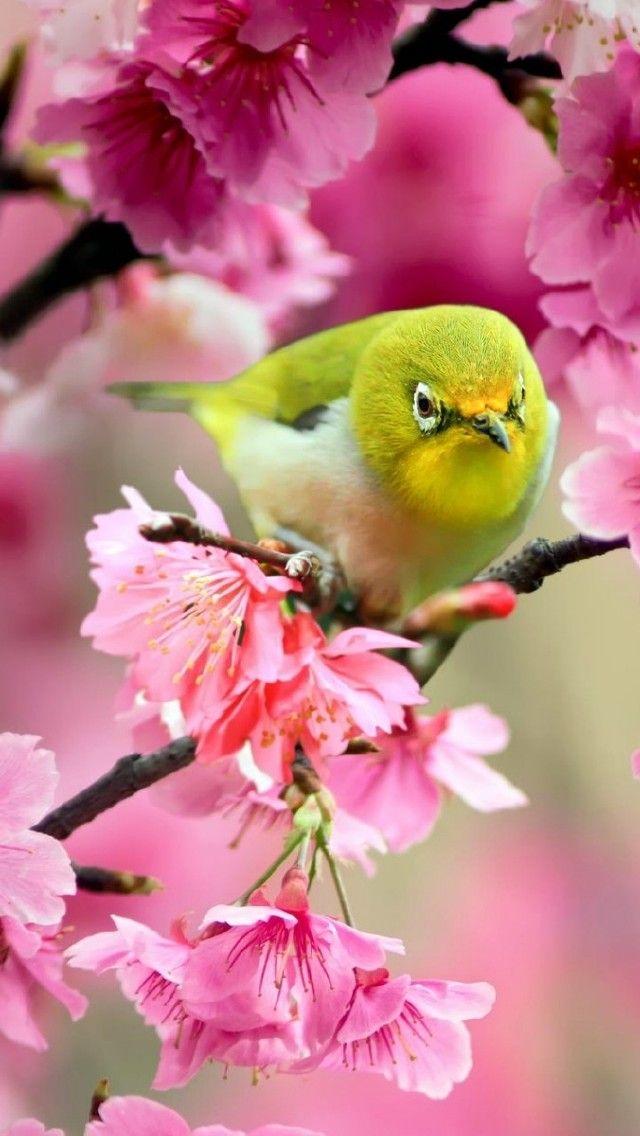 Wallpaper Птичка на весеннем дереве. Деревья, Птицы, Весна, Цветы. Flowers & Plants, Nature   PicsFab.com - Desktop Wallpapers