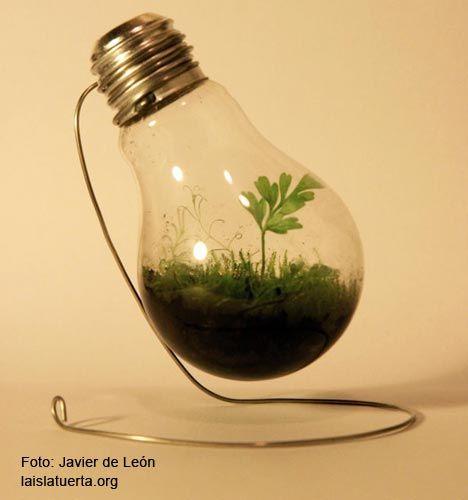 Cómo hacer un jardín en miniatura dentro de una bombilla de luz / #lights #plants