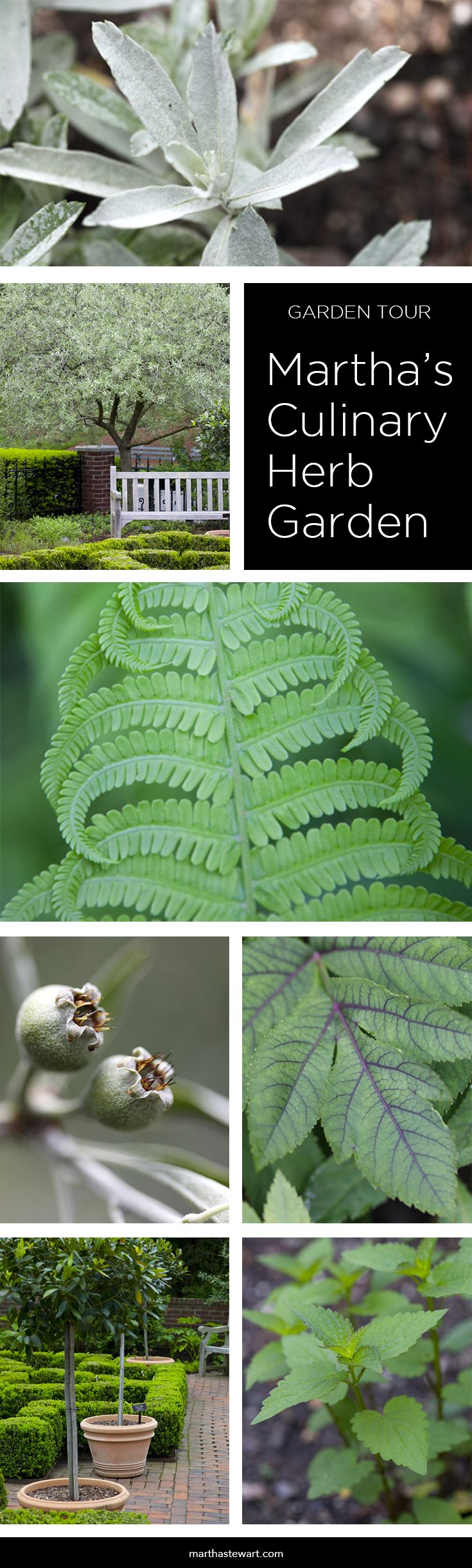 images about Gardening Tips Ideas on Pinterest