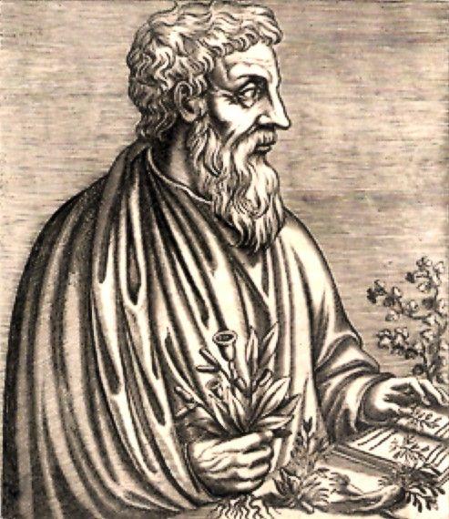 Pedanius Dioscorides invented chewing gum.