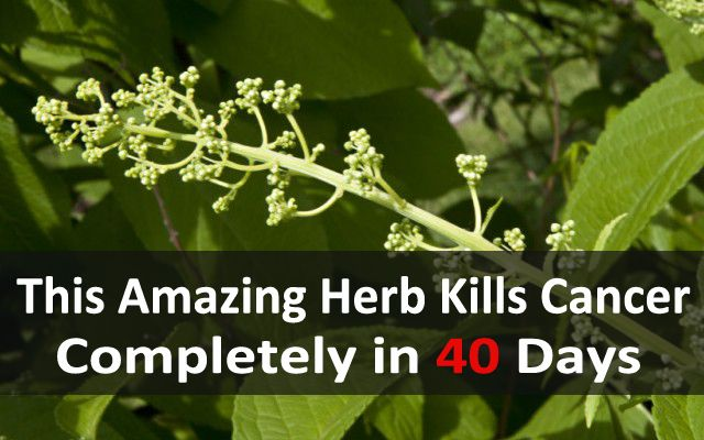 """Scientists have discovered that a plant which is not very well-known with really bizarre name is amazing """"killer"""" of cancer. The plant was tested on mice that had cancer of the pancreas. In just 40..."""