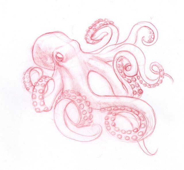 Sketch of octopus for a tattoo. beautiful!