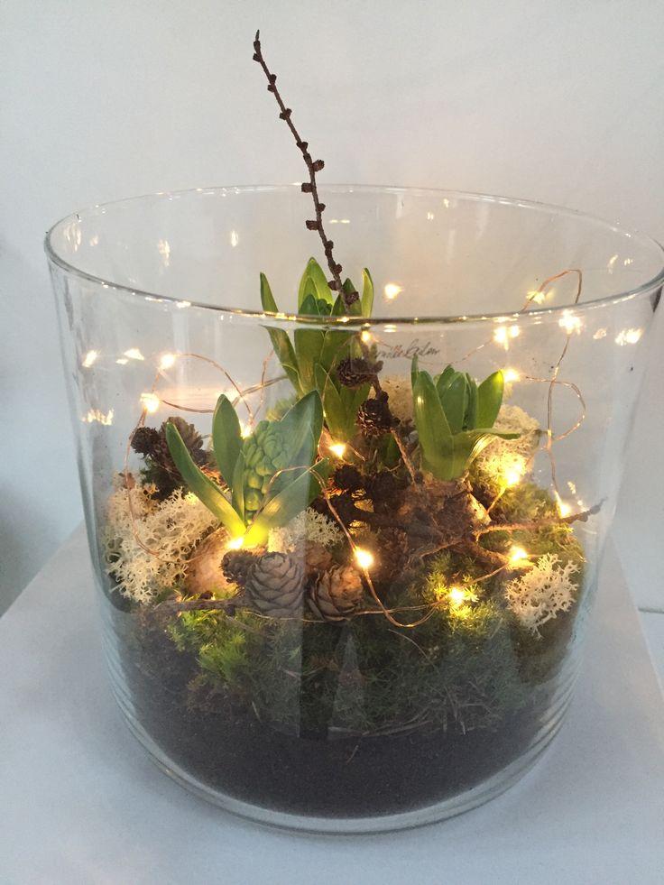Hyacinth, mos, kogler og lys