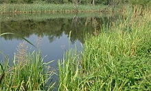 Ramsar Convention -A Wetlands Protection pact covering over 20 sites in the Republic of Ireland as well as others in The Northern Irish member of the British Commonwealth.  Ramsar is signed by over 120 member nations