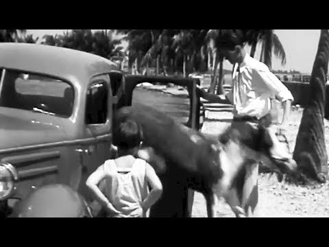 """Pony Car"": Pony Rides in Back Seat of a Chevy 1935 Chevrolet Newsreel https://www.youtube.com/watch?v=9S99APpYna8 #pet #pony #chevy"
