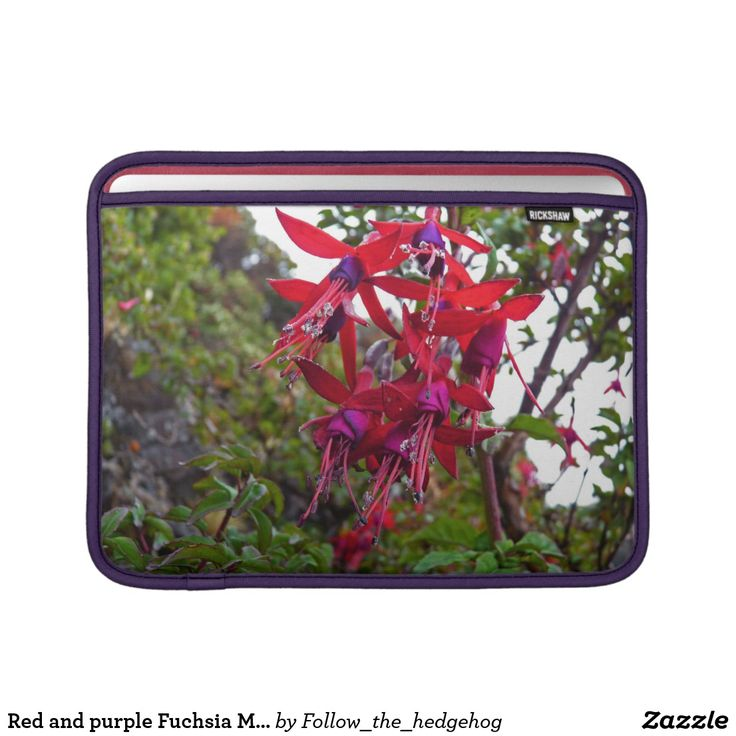 Red and purple Fuchsia Magellanica MacBook Air Sleeve Red and purple Fuchsia Magellanica. Hummingbird Fuchsia or Hardy Fuchsia is a species of flowering plant in the Evening Primrose family, native to Patagonia. The picture was taken in Ushuaia, Argentina