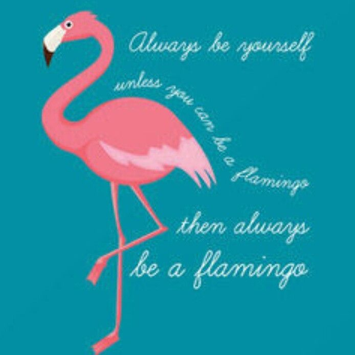 how to flamingos turn pink