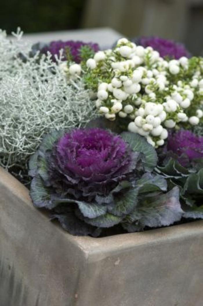 Top 10 des plantes pour jardinières d'hiver - Jardin - Hiver - Femmes…